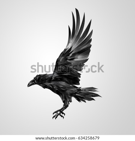 crows flying stock images royaltyfree images amp vectors