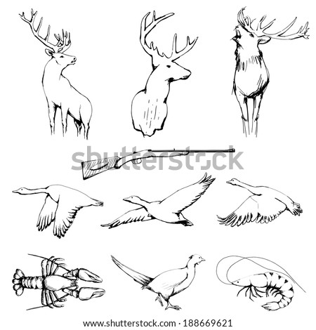 Drawn Wild Animals Collection | raster graphic - stock photo
