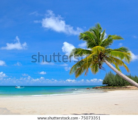 Dream beach with palm tree over the sand - stock photo