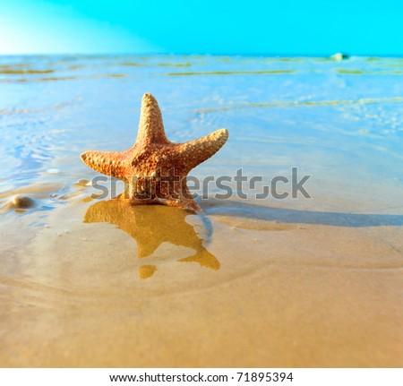 Dream Fish Shell - stock photo