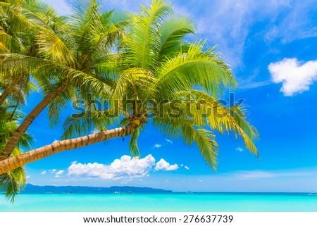 Dream scene. Beautiful palm tree over white sand beach. Summer nature view. - stock photo