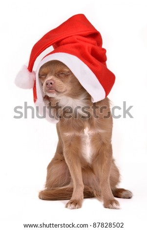 Dreaming Christmas dog wearing Santa hat, isolated on white background