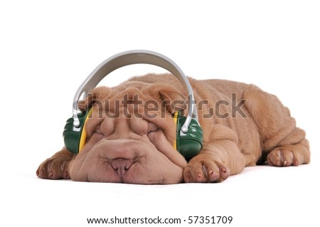 Dreaming Shar-Pei Puppy, listening to music with headphones, isolated - stock photo