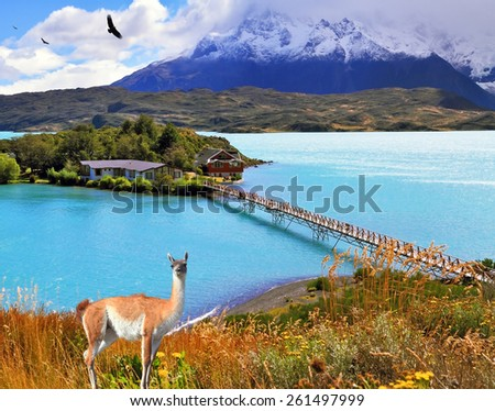 Dreamland Patagonia. In the center of the lake Pehoe - small island with hotel. Island and beach  connect easily bridge. On the hill there is  lovely guanaco.  - stock photo