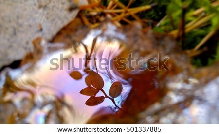 Dreamlike close up of water droplet on autumn leaf, reflecting bilberry twig and blue sky from above. Scene from Scandinavian forest in Finland, Northern Europe