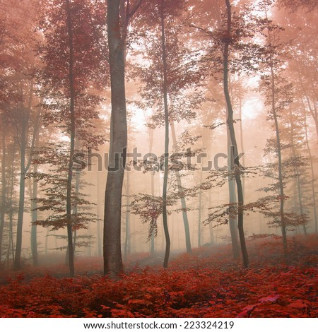 Dreamy autumn foggy forest scene. Red color filter effect used. - stock photo