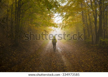 Dreamy autumnal forest path inviting you on a magical journey through the woods. - stock photo
