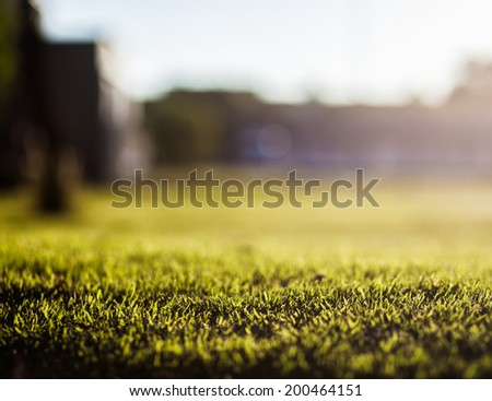 Dreamy background of green grass at sunset