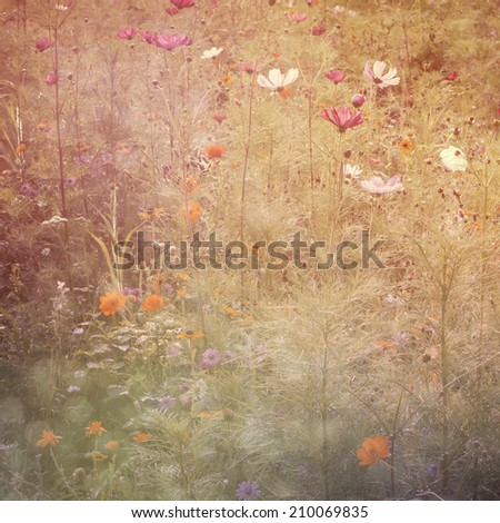 dreamy background with color daisy flowers, glitter candid light - stock photo