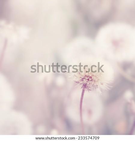Dreamy background with dandelion flowers - stock photo