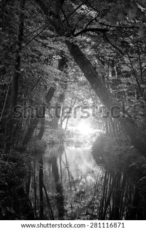 Dreamy forest. Sunshine glow through the woods and on the creek surface. Haze. Nature background. Aged photo. Black and white. - stock photo