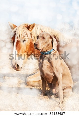 Dreamy image of a Weimaraner dog sitting next to his resting friend, a huge Belgian Draft horse - stock photo