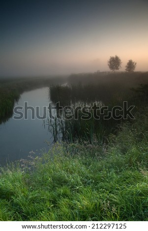 Dreamy landscape on a misty morning with water, grass and a couple of trees - stock photo