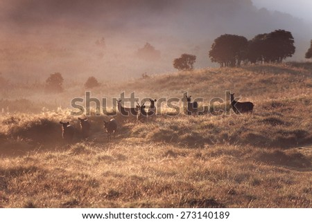 Dreamy landscape with wild deers on sunrise in foggy mountains - stock photo