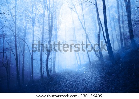 Dreamy peaceful blue colored foggy forest landscape with lovely snowfall. Beautiful winter snowfall in the foggy forest.