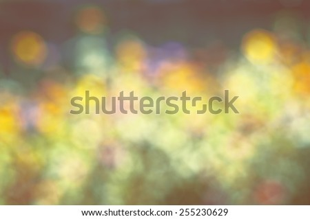 Dreamy Soft and Colorful Zinnia Flowers in a Sunny Garden. Blurred to Use as a Backdrop or Background.  Horizontal multicolor palette of tones and hues, trendy faded yellows and browns - stock photo