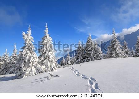 Dreamy sunny Christmas morning full of fresh emotions - stock photo