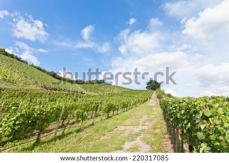 Dresden - Germany - Viniculture - stock photo