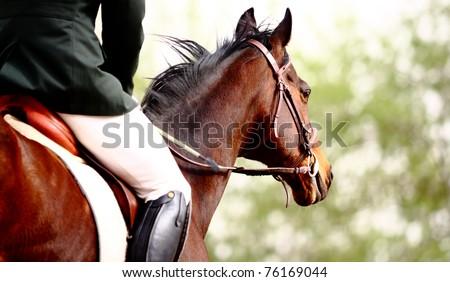 Dressage horse - stock photo