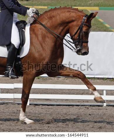 Dressage: portrait of bay horse on sports arena background - stock photo