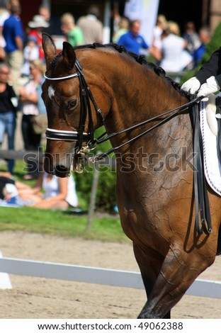 Dressage with beautiful brown horse and rider - stock photo