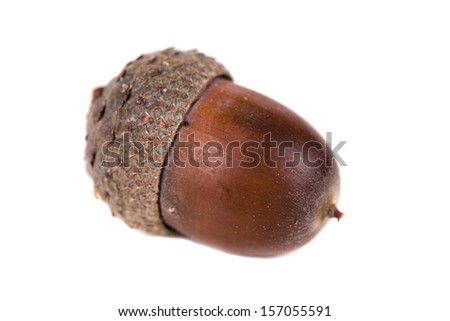 dried acorn  on white background