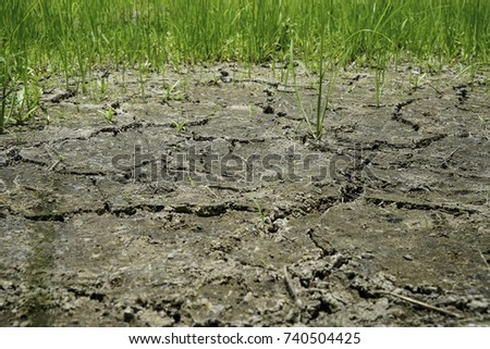 Dried and Cracked ground, Cracked surface with rice, Dry soil in arid areas