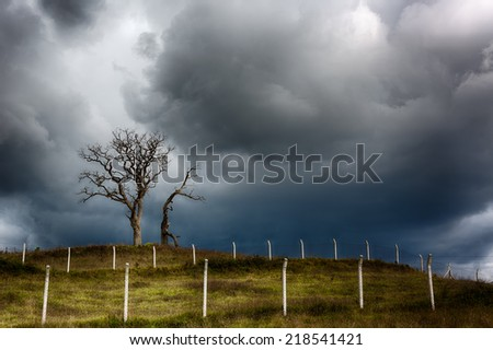Dried and leafless trees with very dramatic sky background