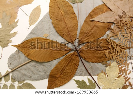 Dried and Pressed Leaves - stock photo