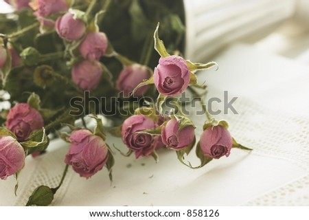 Dried Baby Roses on Linen