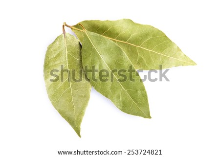Dried bay laurel leaves isolated on a white background - stock photo
