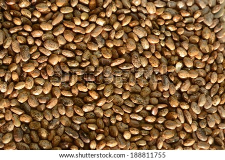 Dried beans - stock photo