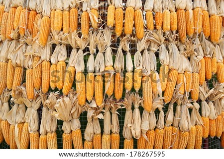 Dried Corn background - stock photo