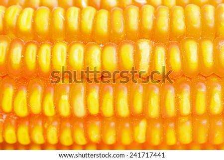 Dried corn closeup  - stock photo