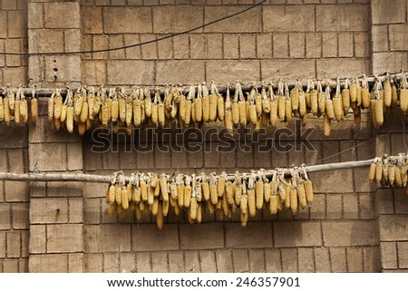Dried corn hang on brick wall - stock photo