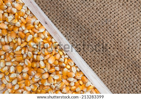 Dried corn seed in box wood burlap on sack - stock photo