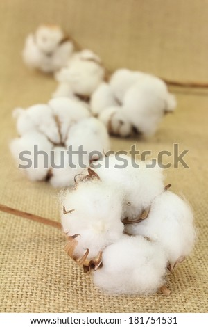 dried cotton flowers on brown jute - stock photo