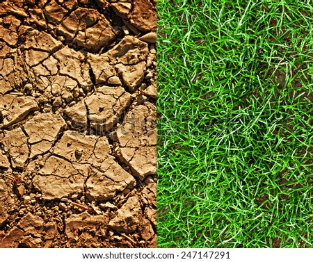 Dried cracked earth and newly sown grass - stock photo