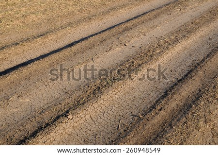 Dried dirt road in the spring.