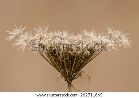 Dried flower in autumn cold - stock photo