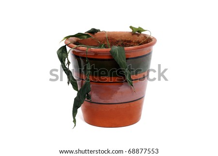 dried flower in pot isolated on white background - stock photo