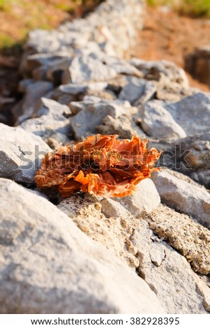 Dried flower on the rocks