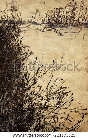 dried flowers  and grass in the snow, winter background - stock photo