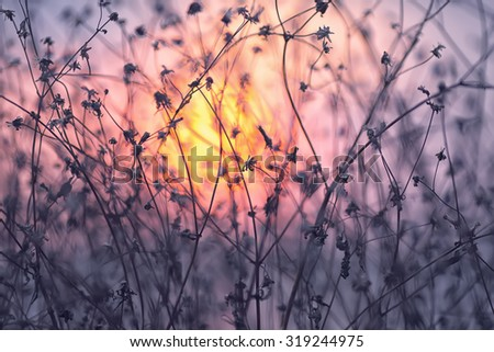 Dried flowers on a background sunset. Shallow depth of field - stock photo