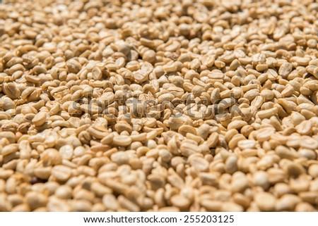 dried fresh coffee beans - stock photo