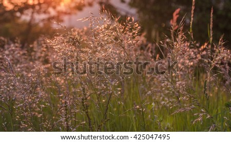 Dried grass in the wind at sunset - stock photo