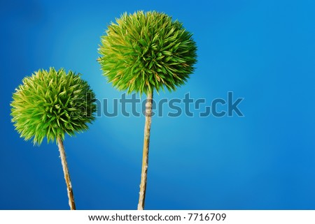 dried green drumstick allium plant over blue background - stock photo