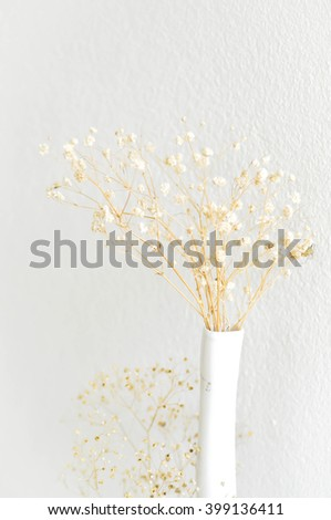 dried gypsophila or dried Baby's Breath in the vase - stock photo