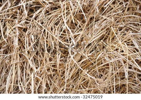 dried hay background - stock photo