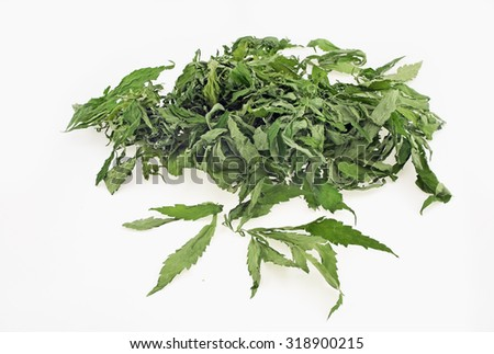 Dried hemp leaves in a white background - stock photo